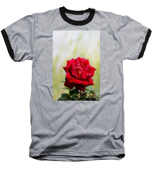 Bright Red Rose Baseball T-Shirt by Perry Van Munster