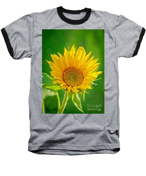 Bright Yellow Sunflower Baseball T-Shirt by Alana Ranney