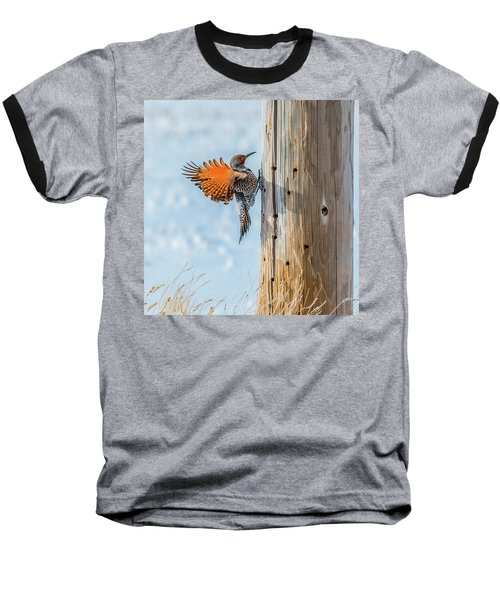 Brilliant Northern Flicker Woodpecker Baseball T-Shirt by Yeates Photography