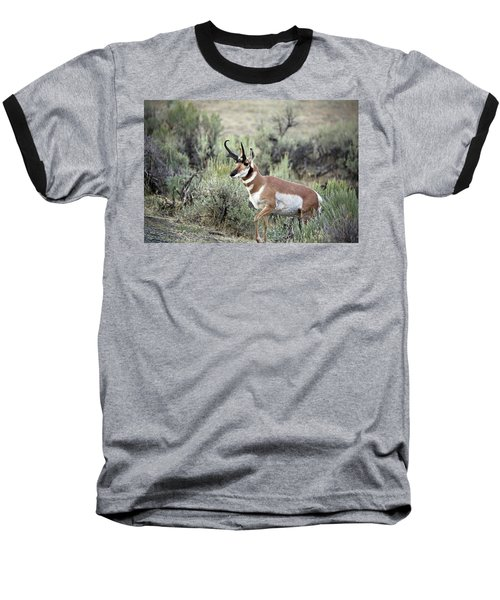 Pronghorn Buck Baseball T-Shirt