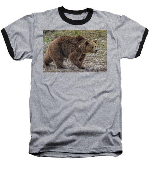 Brown Bear 6 Baseball T-Shirt