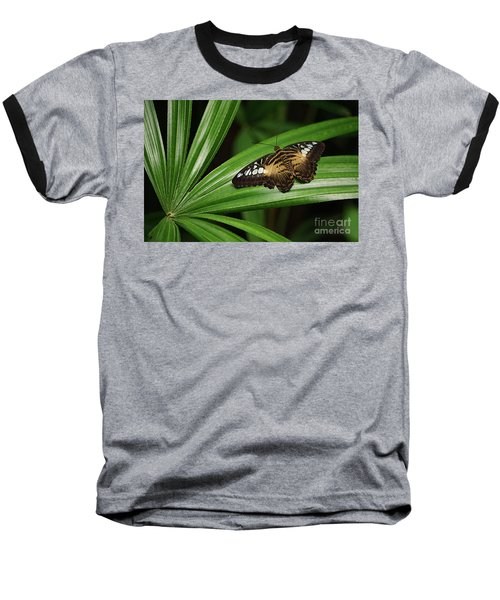 Brown Clipper Butterfly -parthenos Sylvia- On Frond Baseball T-Shirt