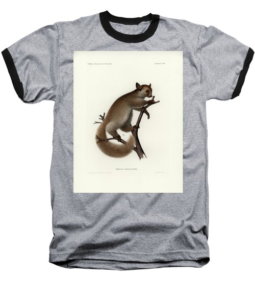 Brown Greater Galago Or Thick-tailed Bushbaby Baseball T-Shirt by Hugo Troschel and J D L Franz Wagner