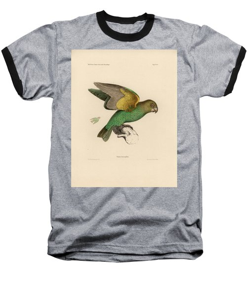 Brown-headed Parrot, Piocephalus Cryptoxanthus Baseball T-Shirt