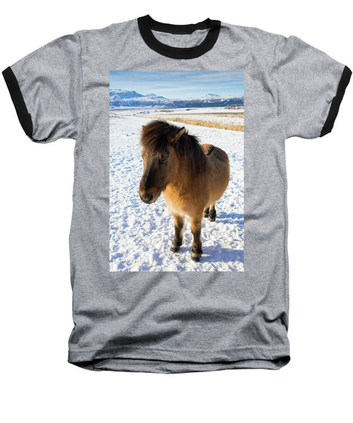 Baseball T-Shirt featuring the photograph Brown Icelandic Horse In Winter In Iceland by Matthias Hauser