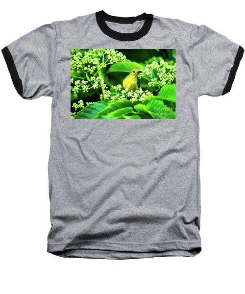Brown Neck Sunbird Baseball T-Shirt