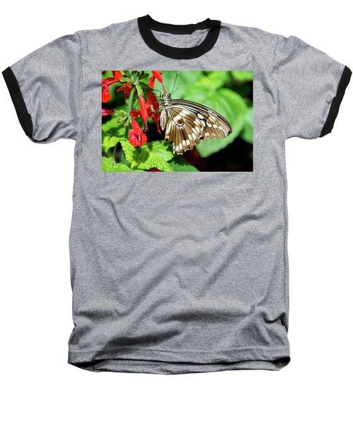 Brown Swallowtail Butterfly Baseball T-Shirt