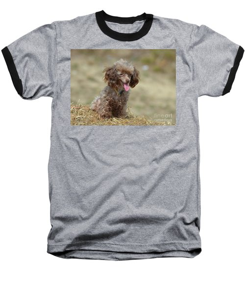 Brown Toy Poodle On Bail Of Hay Baseball T-Shirt