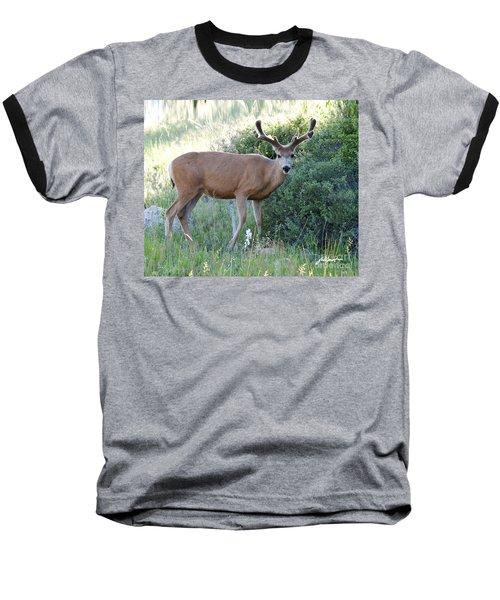 Buck In Velvet Baseball T-Shirt