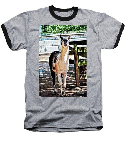 Bucktoothed Llama Baseball T-Shirt