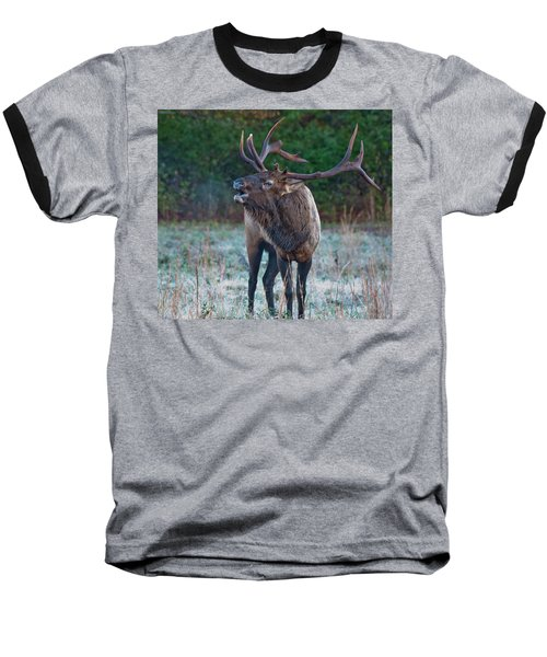 Bugling Elk Baseball T-Shirt