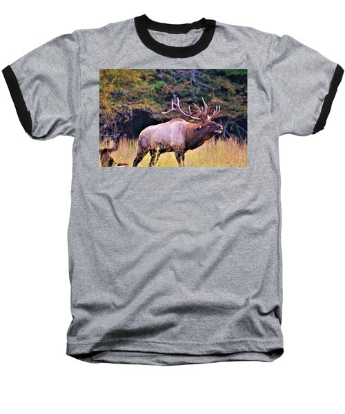 Bull Calling His Herd Baseball T-Shirt