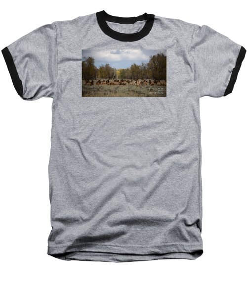 Baseball T-Shirt featuring the photograph Bull Elk And Harem by Sandy Molinaro