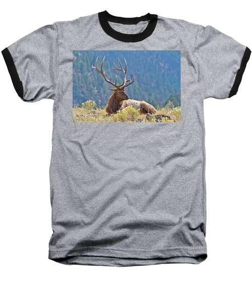 Baseball T-Shirt featuring the photograph Bull Elk Resting by Wesley Aston