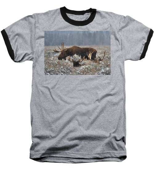 Baseball T-Shirt featuring the photograph Bull Moose In The Snowy Meadow by Adam Jewell