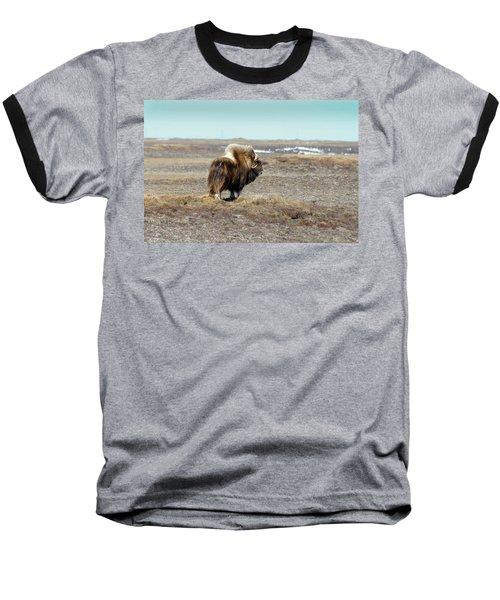 Bull Musk Ox Baseball T-Shirt by Anthony Jones
