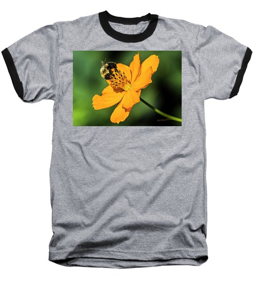 Bumble Bee And Flower Baseball T-Shirt