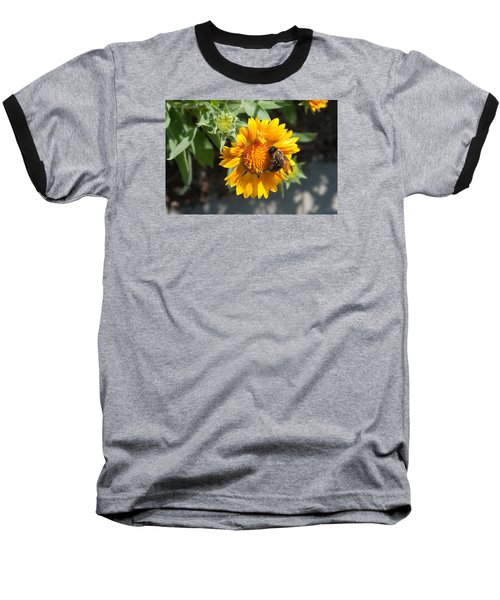 Bumble Bee Collecting Pollen On Sunflower Baseball T-Shirt