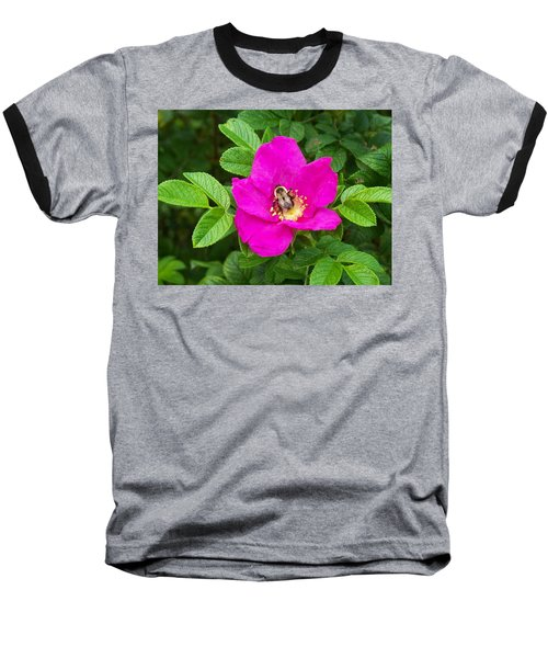 Bumble Bee On A Wild Rose Baseball T-Shirt by Joy Nichols