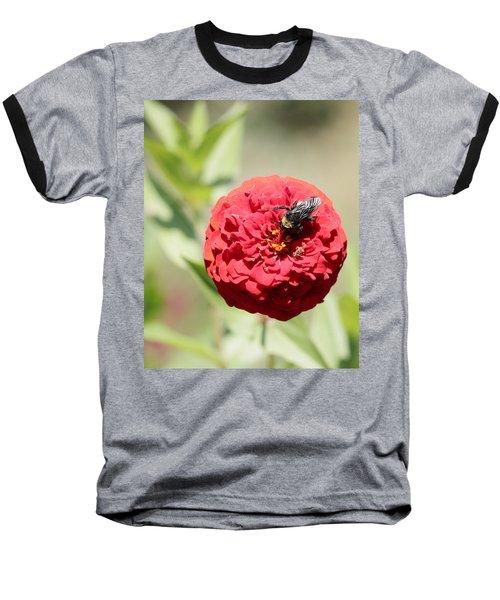 Bumble Bee On Zinnia Baseball T-Shirt