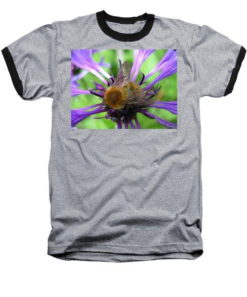 Bumblebee In Blue Baseball T-Shirt