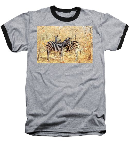 Burchells Zebras Baseball T-Shirt by Betty-Anne McDonald