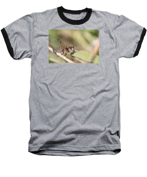 Bush Cricket Baseball T-Shirt