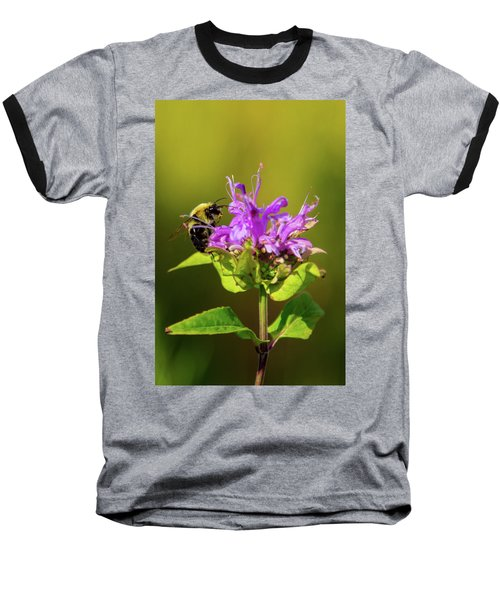Busy As A Bee Baseball T-Shirt