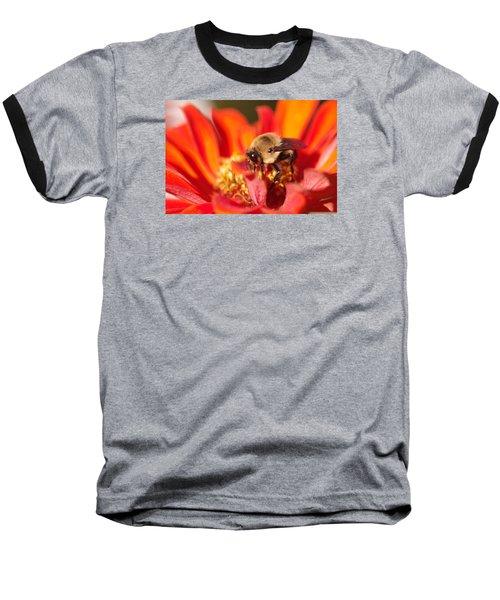 Busy Bee II Baseball T-Shirt by Greg Graham