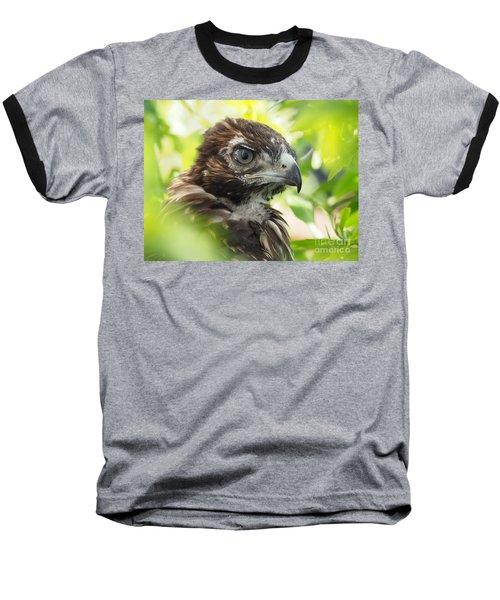 Buteo Jamaicensis Baseball T-Shirt