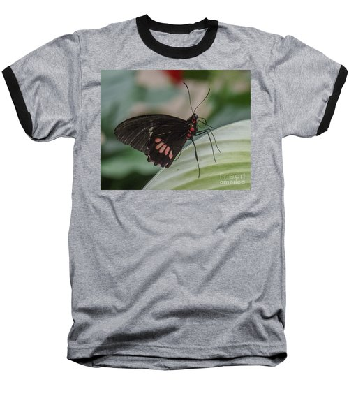 Butterfly 8 Baseball T-Shirt