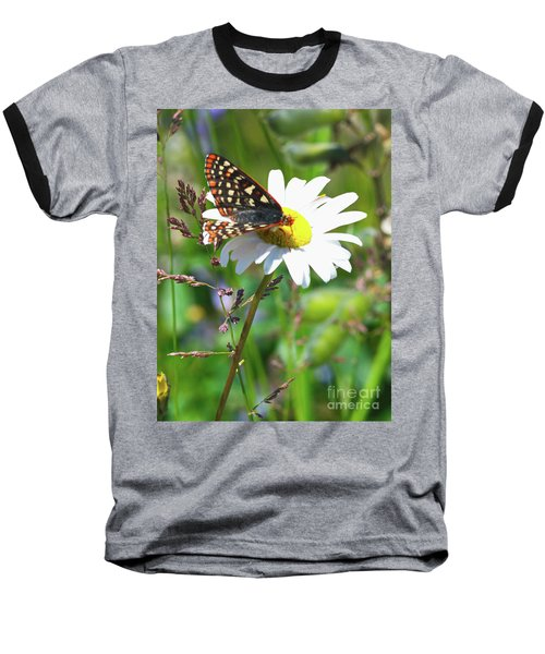 Butterfly On A Wild Daisy Baseball T-Shirt by Ansel Price