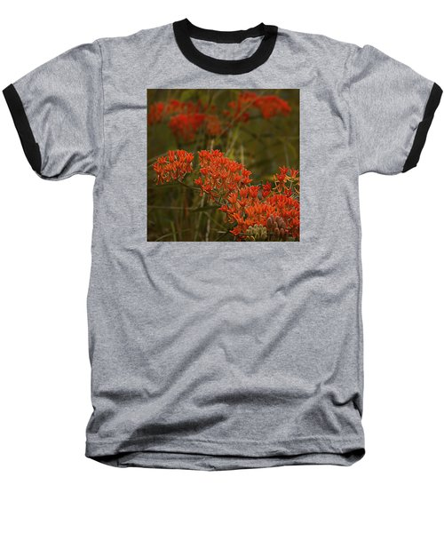 Butterfly Weed Asclepias Tuberosa Baseball T-Shirt by Bellesouth Studio