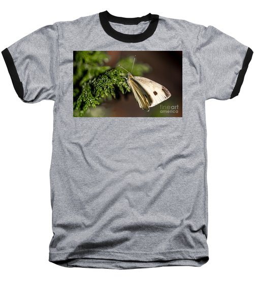 Cabbage Butterfly On Evergreen Bush Baseball T-Shirt