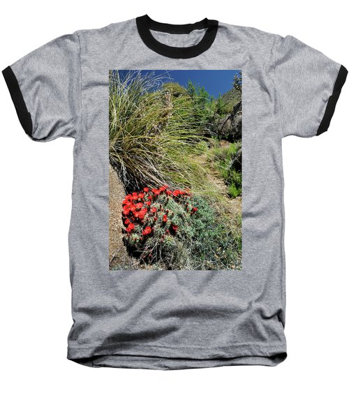 Crimson Barrel Cactus Baseball T-Shirt