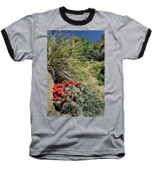 Crimson Barrel Cactus Baseball T-Shirt