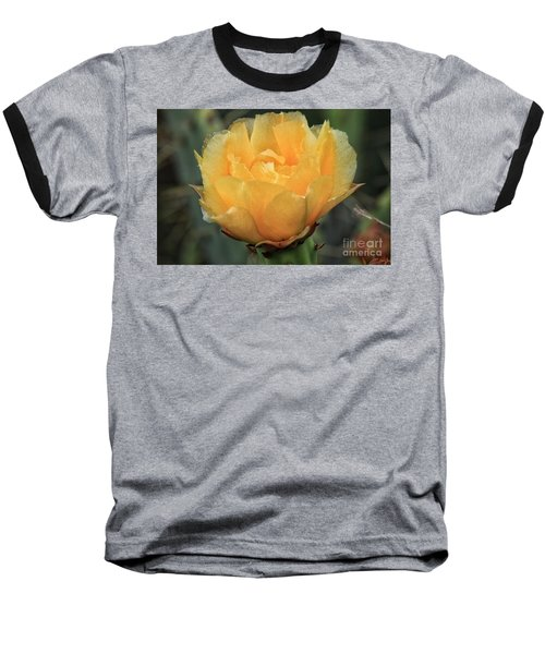 Cactus Flower 2016   Baseball T-Shirt by Toma Caul