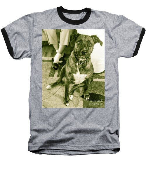 Baseball T-Shirt featuring the photograph Caeser 6 by Robin Coaker