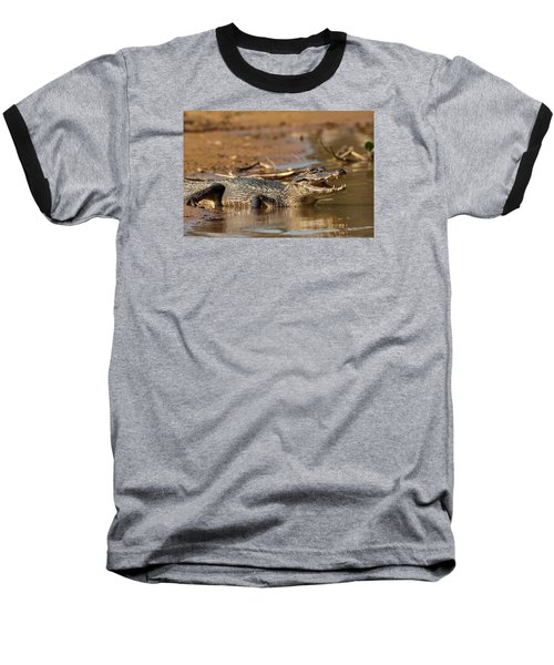 Caiman With Open Mouth Baseball T-Shirt by Aivar Mikko