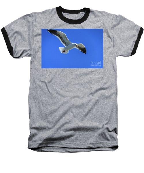 California Gull Baseball T-Shirt by Robert Bales