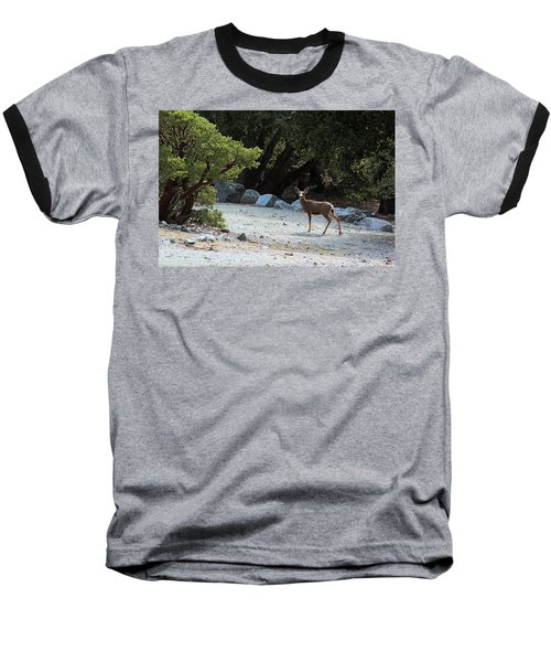 California Mule Deer Baseball T-Shirt by Viktor Savchenko