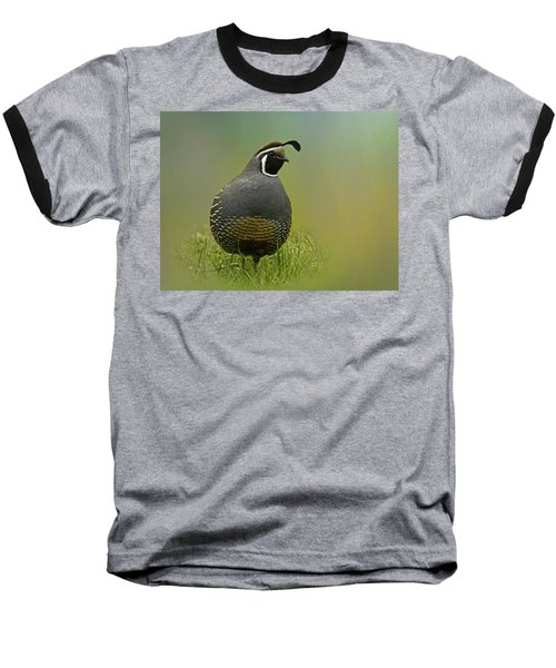 California Quail - 365-42 Baseball T-Shirt by Inge Riis McDonald