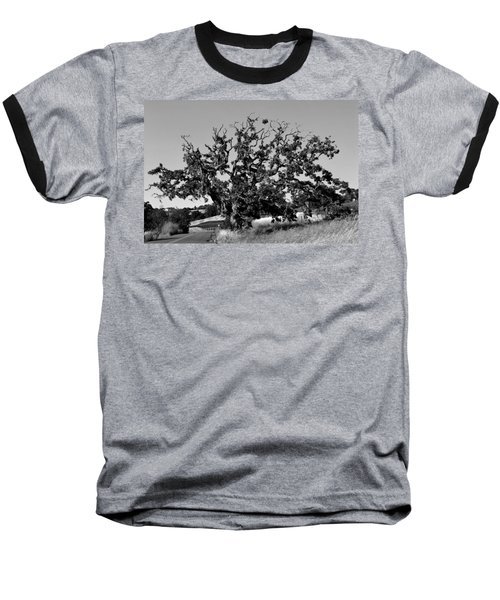 California Roadside Tree - Black And White Baseball T-Shirt