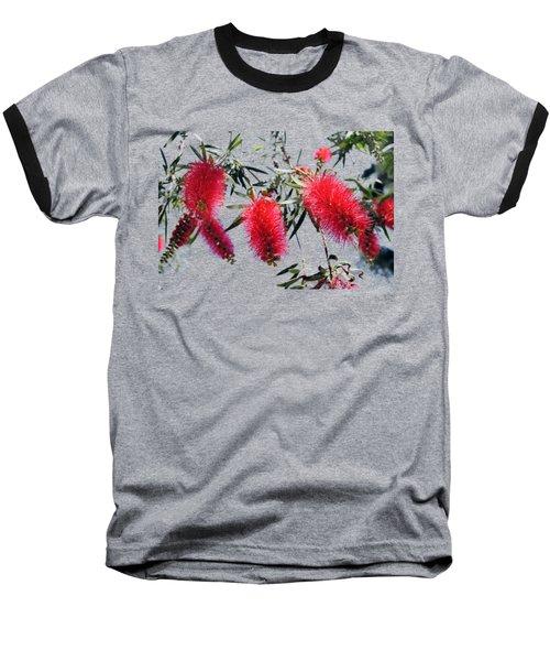 Callistemon - Bottle Brush T-shirt 3 Baseball T-Shirt by Isam Awad