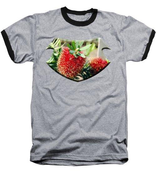 Callistemon - Bottle Brush T-shirt 4 Baseball T-Shirt by Isam Awad