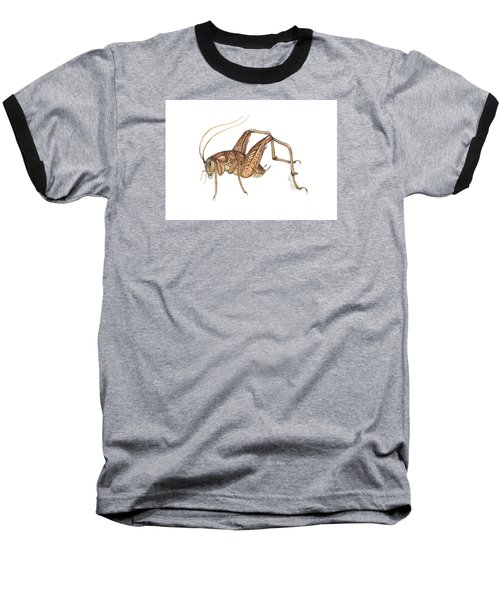 Camel Cricket Baseball T-Shirt by Cindy Hitchcock