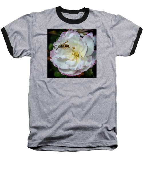Camelia With Company Baseball T-Shirt by Susi Stroud