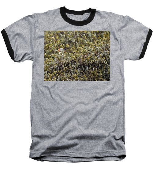 Camouflaged Red-bellied Woodpecker Baseball T-Shirt by Carolyn Marshall