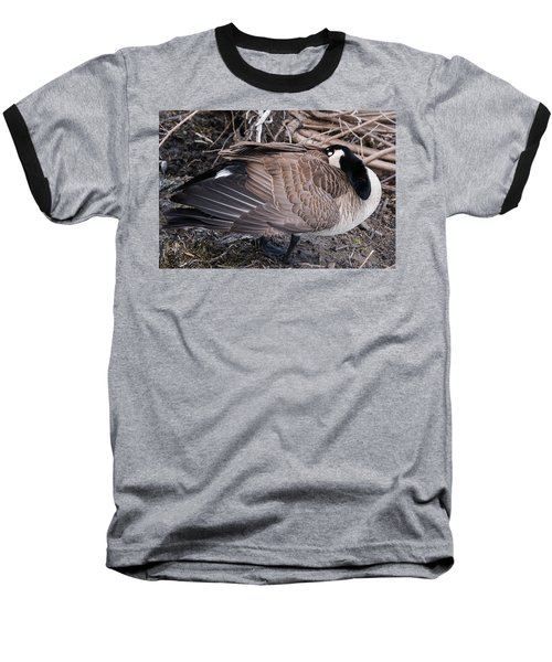 Baseball T-Shirt featuring the photograph Canada Goose Asleep by Edward Peterson