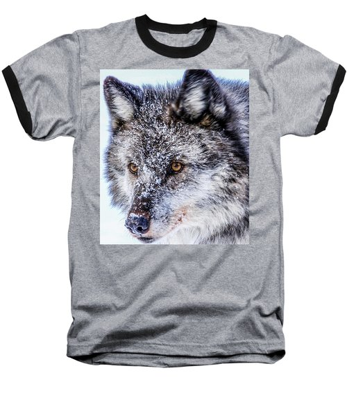 Canadian Grey Wolf In Portrait, British Columbia, Canada Baseball T-Shirt